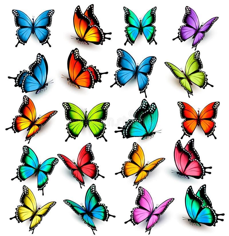färgrik fjärilssamling stock illustrationer