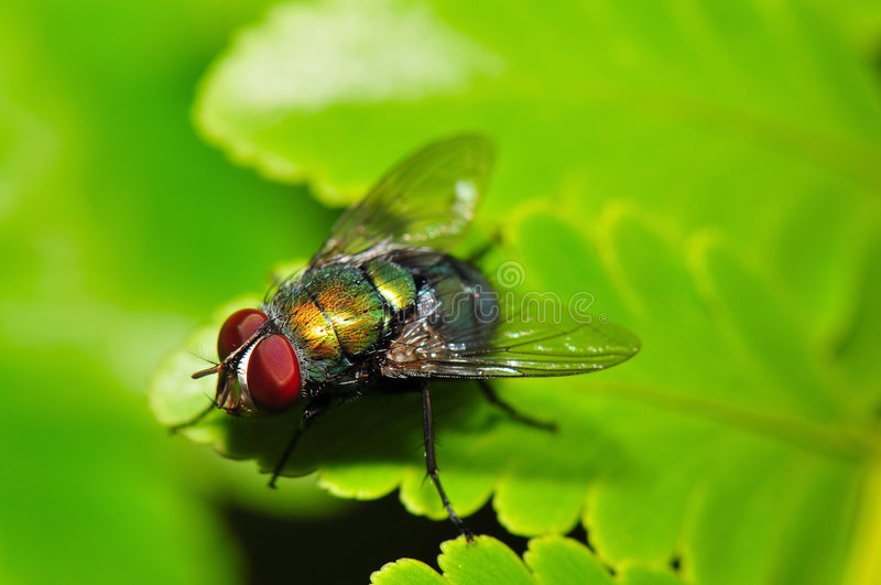 färgrik fluga royaltyfria foton