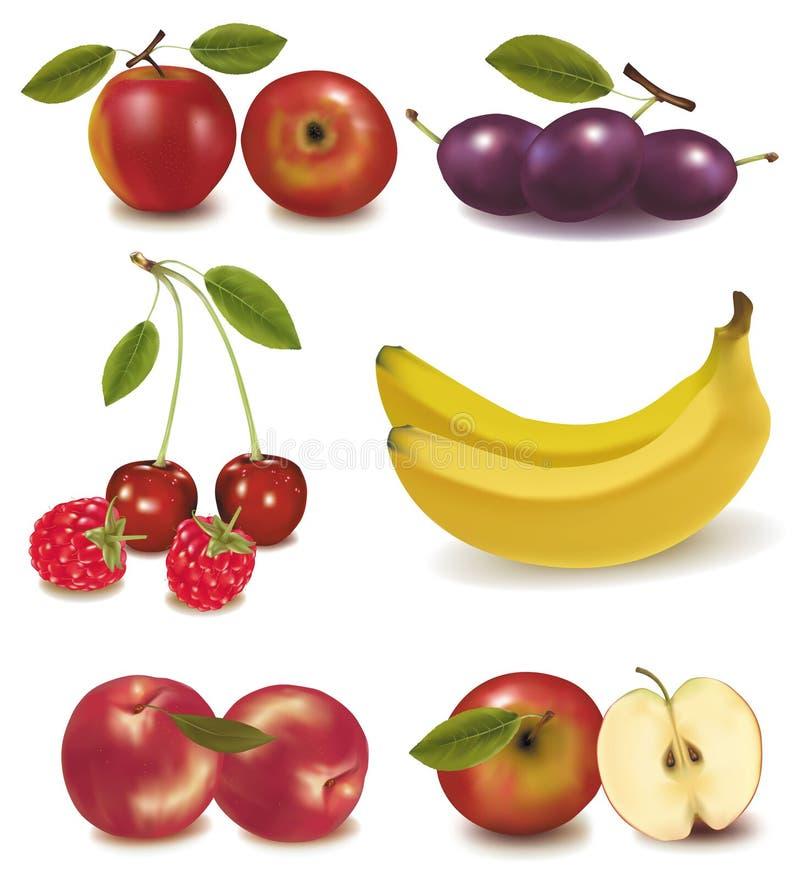 färgrik fruktgrupp stock illustrationer