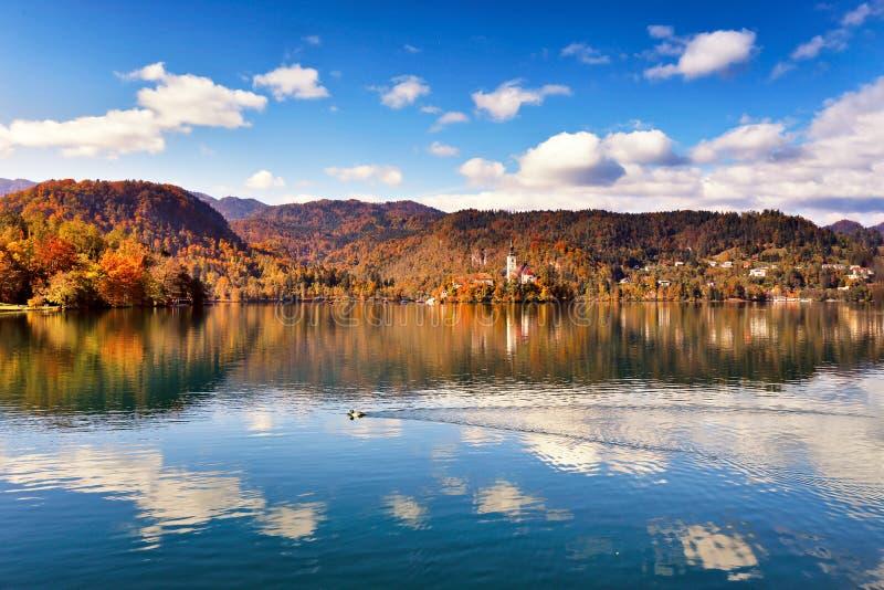 Färgrik höst på Bled sjön, Slovenien arkivfoto