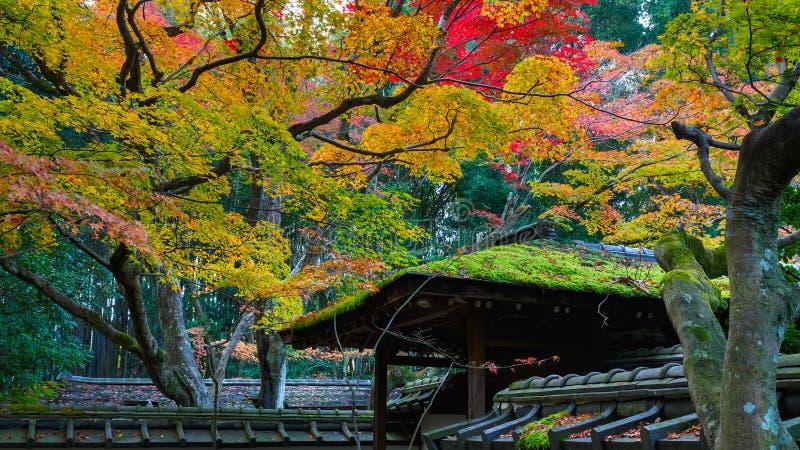 Färgrik höst på Koto-i templet i Kyoto arkivfoton