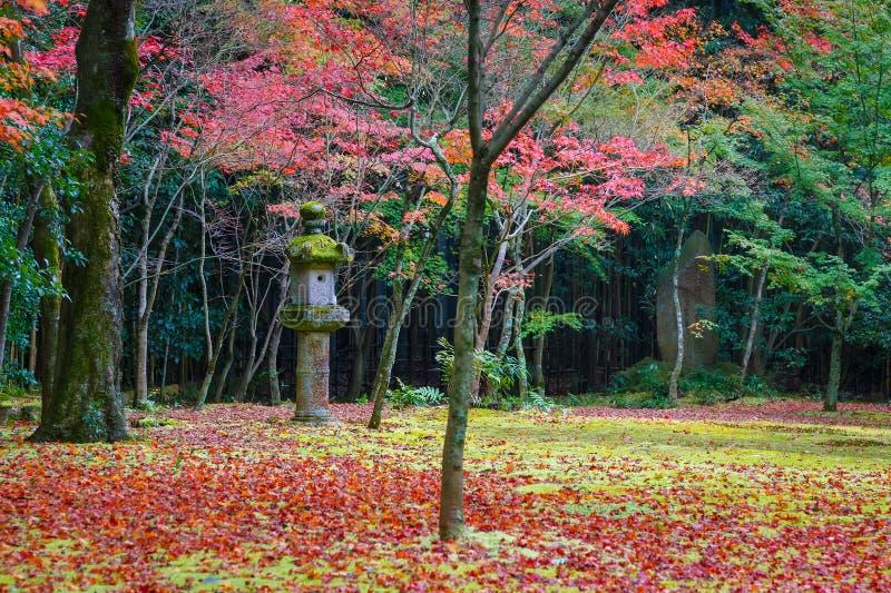 Färgrik höst på Koto-i templet i Kyoto fotografering för bildbyråer