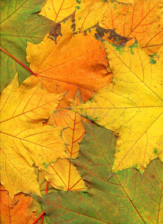 färgrik höstbakgrund arkivfoton