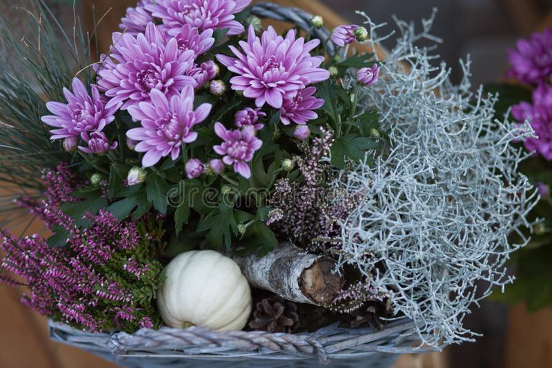 Färgrik höstlig krysantemumgarnering Att blomstra blommar i krukorna med örter, liten pumpa i korg Nedgångdekor arkivbilder