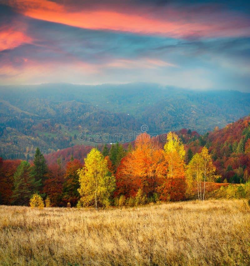 Färgrik höstmorgon i Carpathian berg royaltyfri fotografi