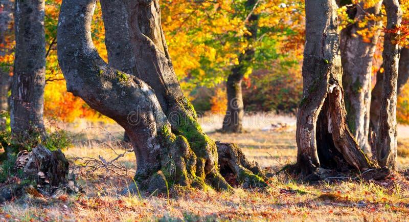 Färgrik höstpanorama av skogen royaltyfria bilder