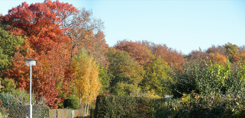 Färgrik höstskog för panorama arkivfoto