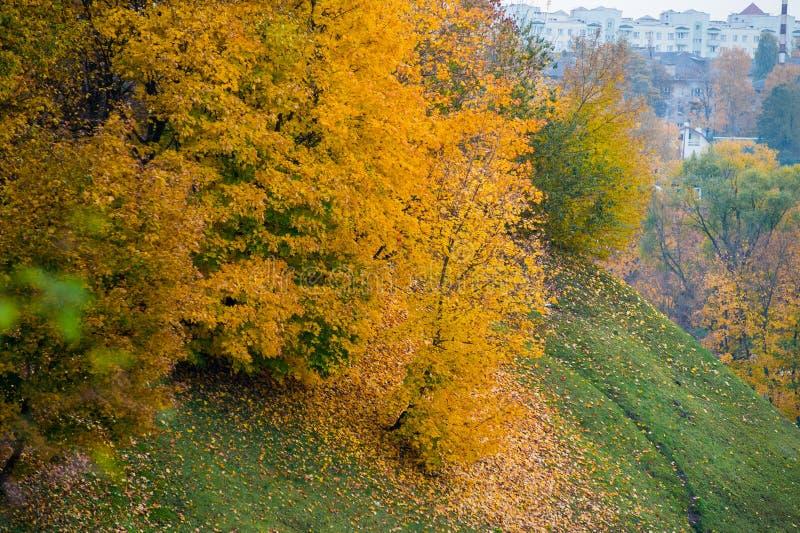 Färgrik höstskog i nedgång från den Ozark Mountain vildmarken av Arkansas Träden kommer vid liv med färg som säsongerna och royaltyfri fotografi