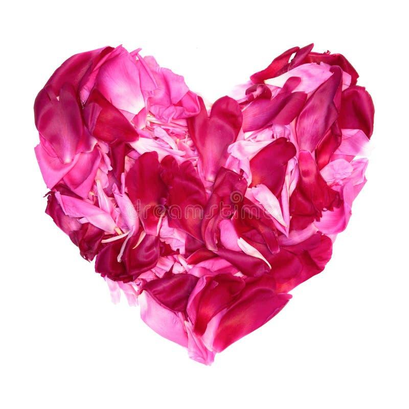 Färgrik hjärta av kronbladpionblommor arkivfoton