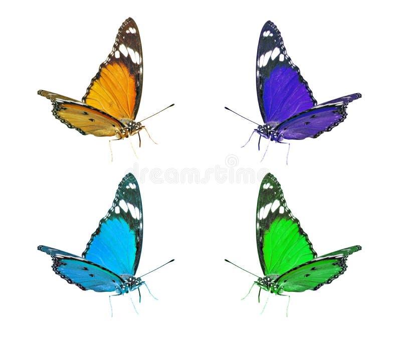 Färgrik isolerad samling för flyg fjäril royaltyfria bilder