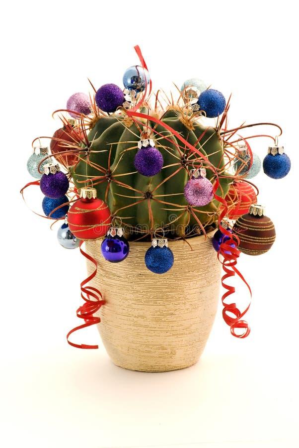färgrik kaktus arkivfoton