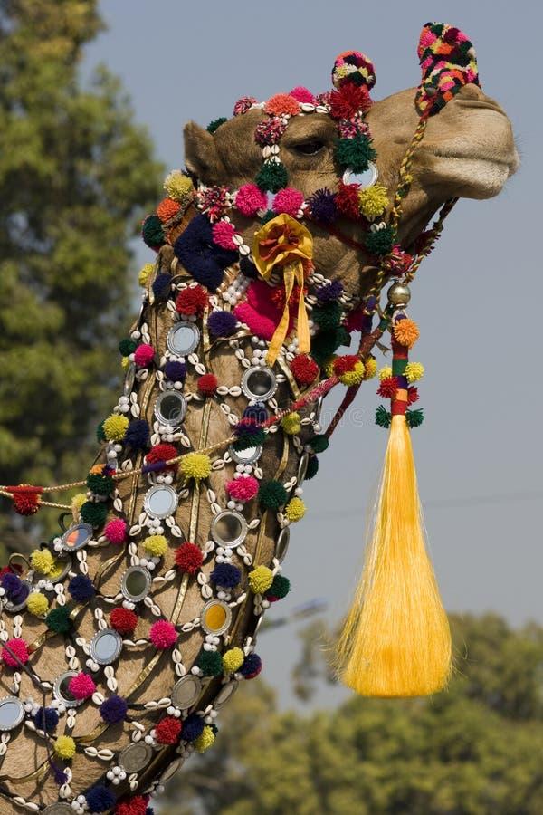 färgrik kamel arkivbild