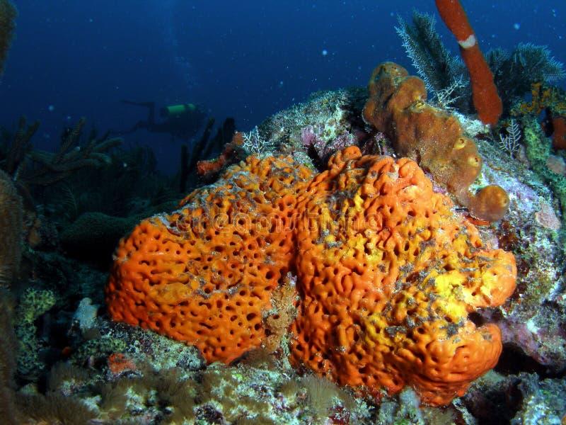 färgrik korallorange royaltyfria foton