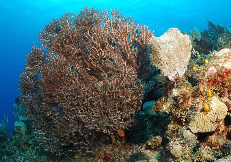 Färgrik korallrev royaltyfri bild