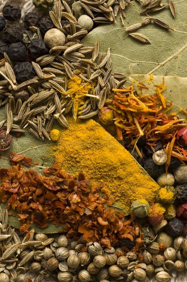 färgrik krydda royaltyfri bild