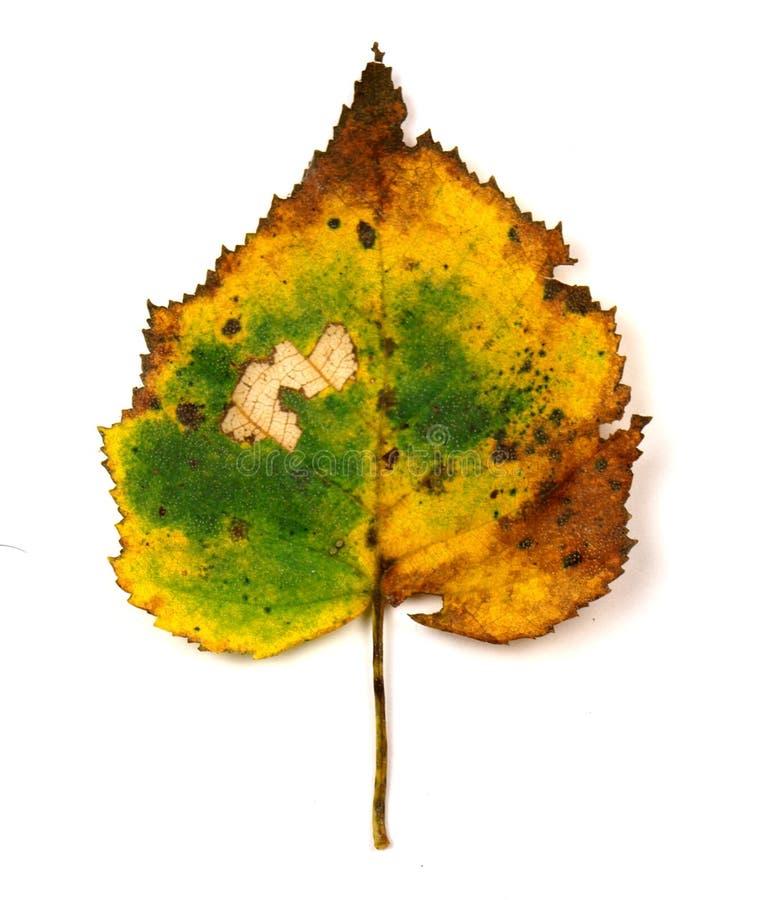 färgrik leaf fotografering för bildbyråer