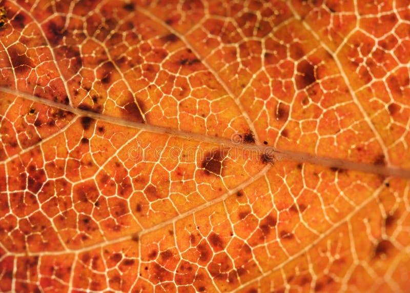färgrik leafmakro arkivbild