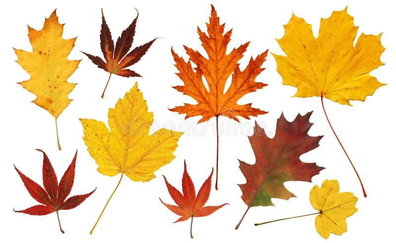färgrik leavestree arkivbilder