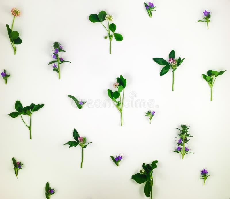 Färgrik ljus modell av ängörter och blommor på vit bakgrund Lekmanna- lägenhet royaltyfri fotografi