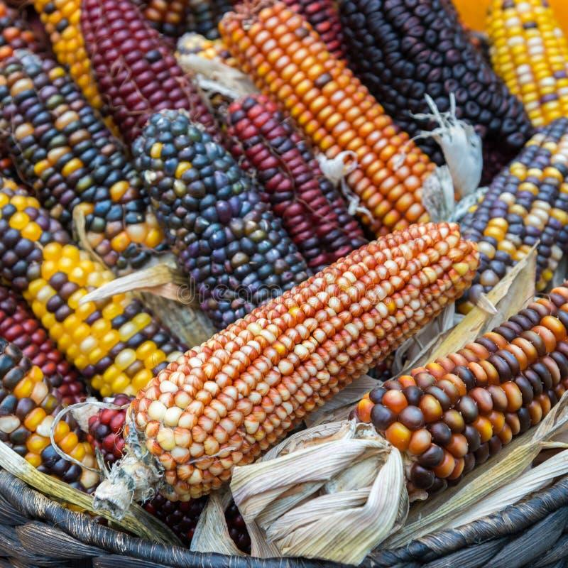 Färgrik majs i en korg arkivfoto