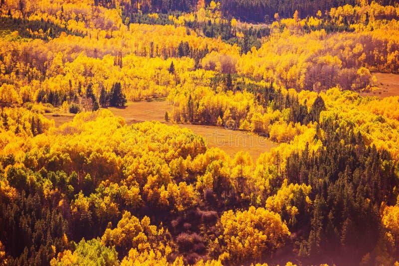 Färgrik nedgång Forest Scenery royaltyfri fotografi