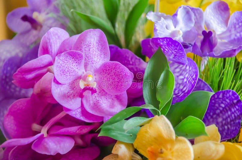 Färgrik orchid royaltyfri fotografi