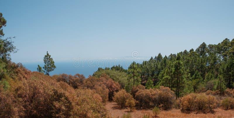 Färgrik panorama för höstskoglandskap, kopieringsutrymme för blå himmel royaltyfri foto
