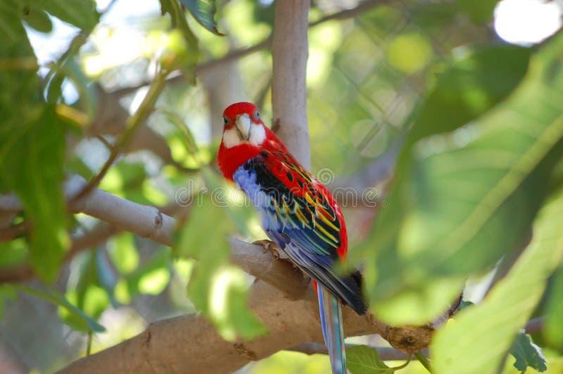 Färgrik papegoja på ett träd royaltyfri fotografi