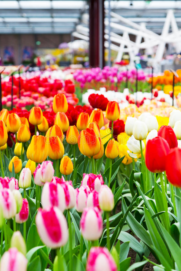 Färgrik pavillion med den mångfärgade tulpanblomsterrabatten royaltyfri fotografi