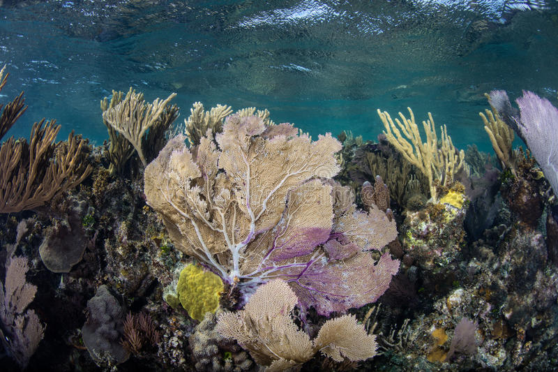 Färgrik rev i det karibiska havet arkivfoton