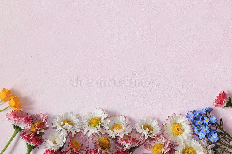 Färgrik rosa sommarbakgrund med tusenskönablommor royaltyfri foto