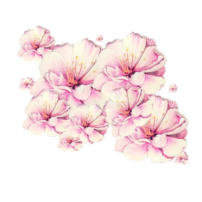 Färgrik sakura blomma royaltyfri illustrationer
