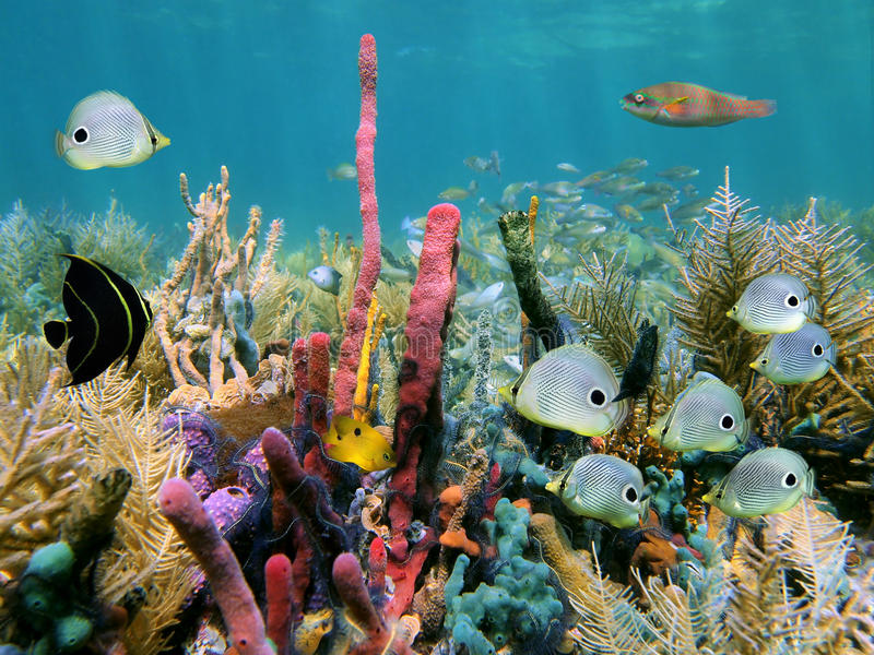 färgrik seabed arkivbilder