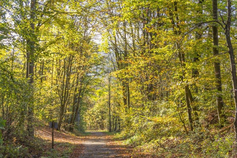färgrik skog för höst arkivfoto