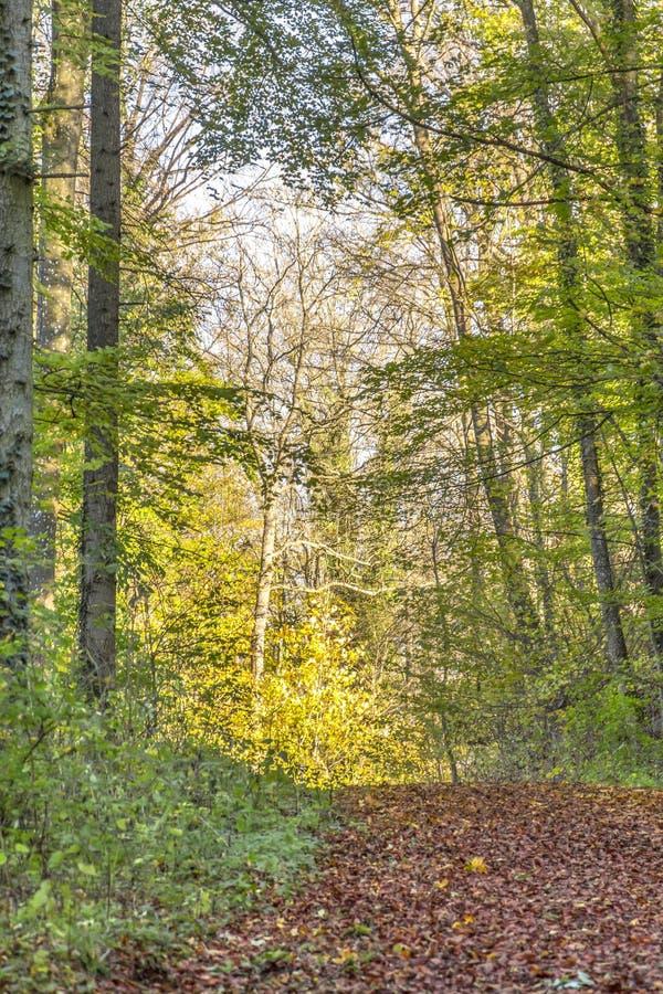 färgrik skog för höst fotografering för bildbyråer