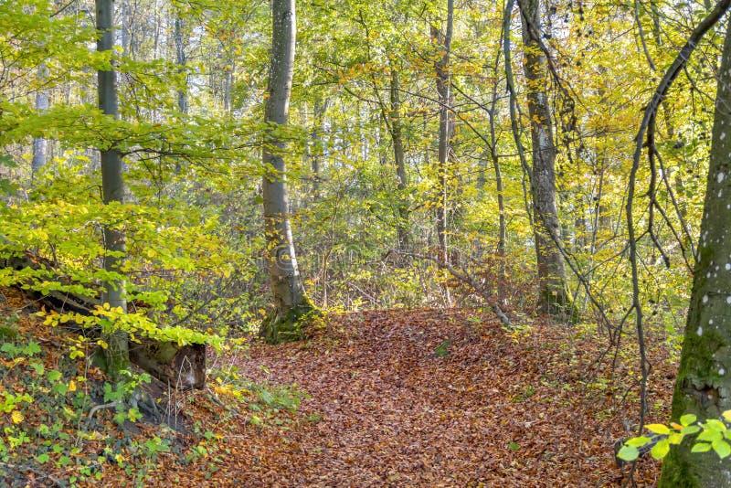 färgrik skog för höst royaltyfria foton