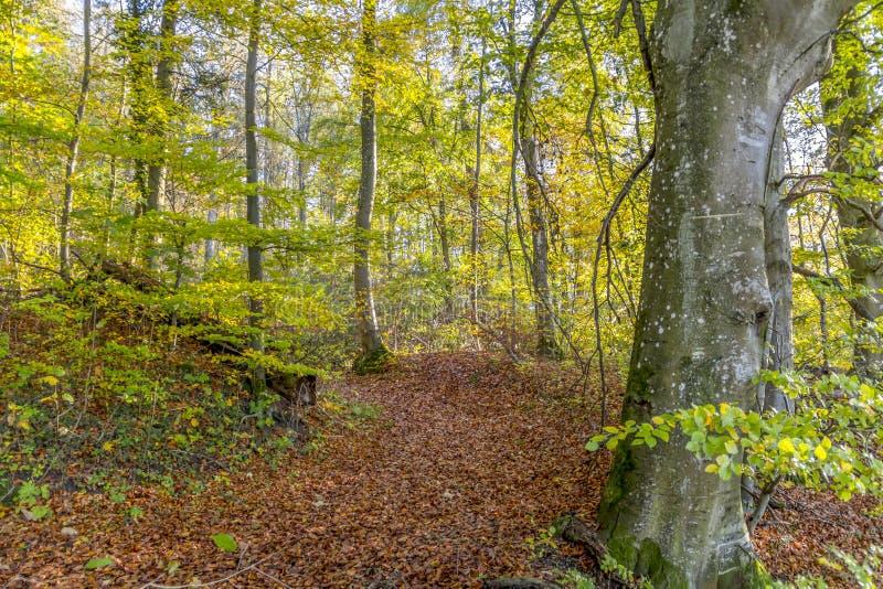 färgrik skog för höst royaltyfri fotografi
