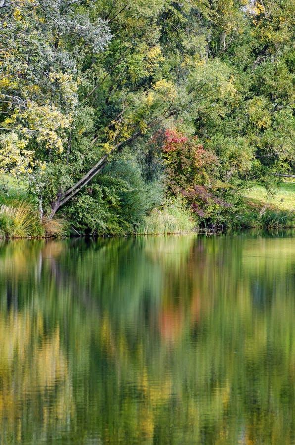 Färgrik skog som avspeglar på ett damm arkivbilder
