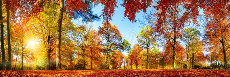 Färgrik skogpanorama i höst fotografering för bildbyråer