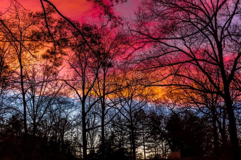 Färgrik solnedgång med konturer av träd arkivfoton
