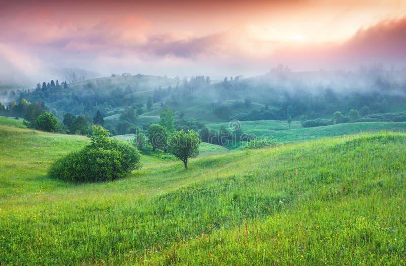 Färgrik sommarsoluppgång i de dimmiga bergen royaltyfri foto