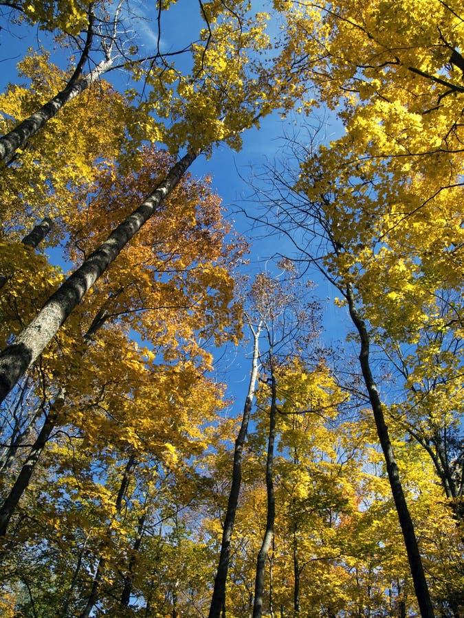 färgrik tree royaltyfria foton