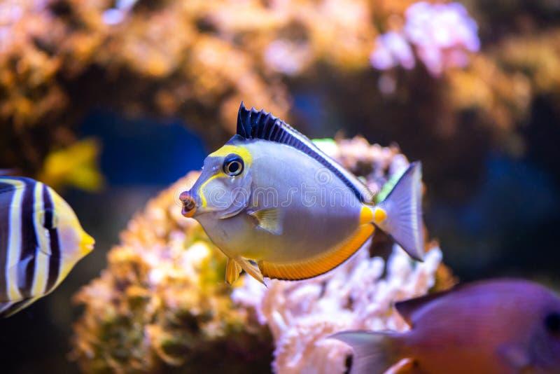 Färgrik tropisk fisk arkivbild