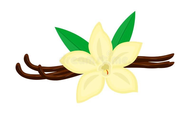 Färgrik vaniljblomma och fröskidavektorillustration som isoleras på vit bakgrund royaltyfri illustrationer