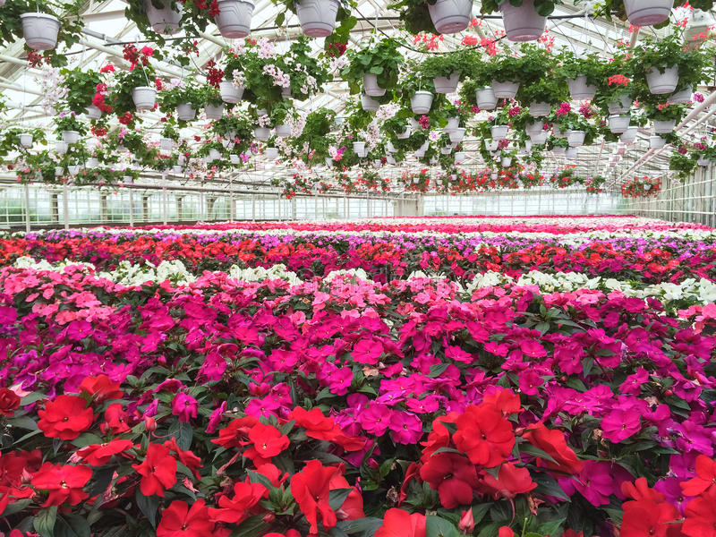 Färgrik variation av blommor i en trädgårds- mitt arkivfoto