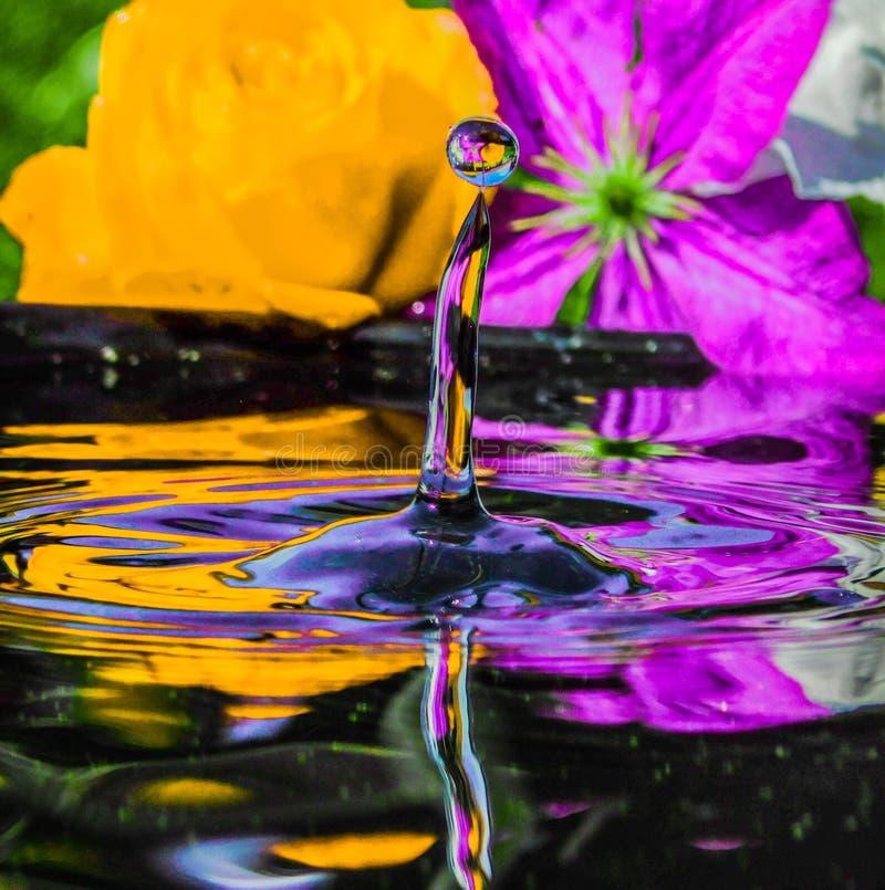 Färgrik vattendroppe med blommor i bakgrund royaltyfria bilder