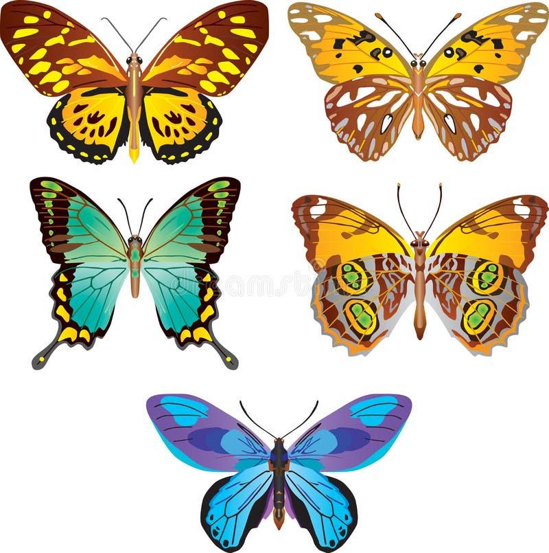 färgrik vektor för fjäril stock illustrationer