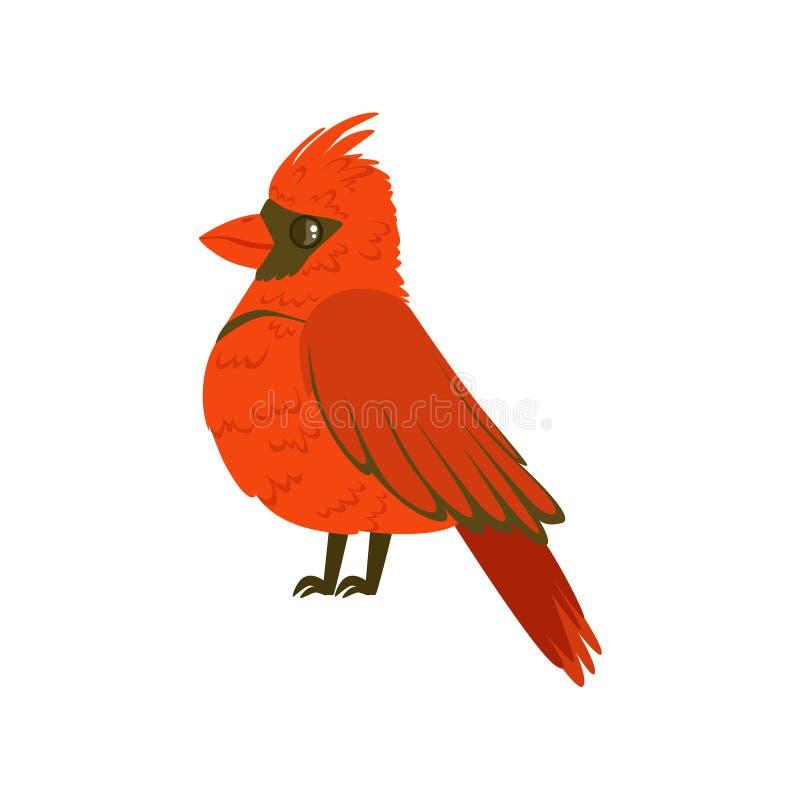 Färgrik vektorillustration för liten ljus röd tropisk fågel royaltyfri illustrationer