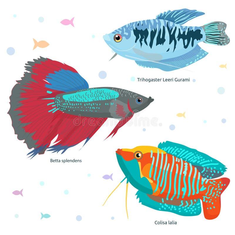 Färgrik vektoruppsättning för fisk royaltyfria foton