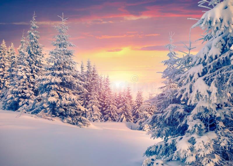 Färgrik vintersoluppgång i bergskog royaltyfri fotografi
